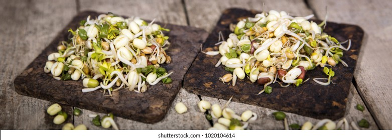 panorama of microgreens with rustic wooden background