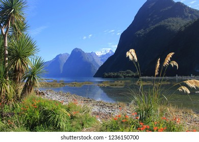 Panorama of Milford Sound looking northwest from the township. Mitre Peak (centre) rises 1,692 m (5,551 ft) above the sound.