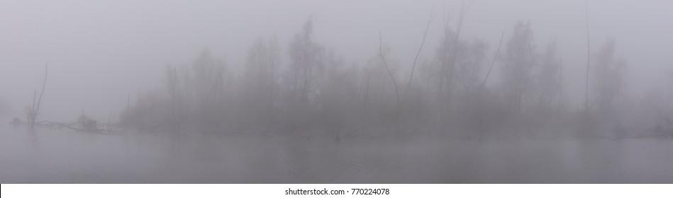 Panorama of misty trees in the swamp of national park de Biesbosch near the village of Dodrecht, Zuid-Holland.