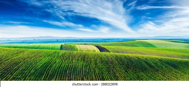 Panorama of Moravian rolling landscape with lines of sprouts. Moravia, Czech Republic