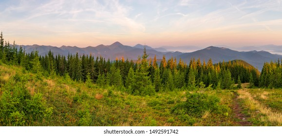 Panorama morning view of the Carpathian mountains. Morning on the Montenegrin ridge, Transcarpathia, Ukraine, Europe. Beauty of nature, background concept