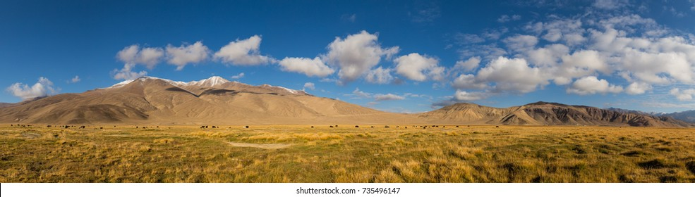 Panorama of mountain pastures with wild yaks in the Pamir mountains in Tajikistan, on the border with Afghanistan