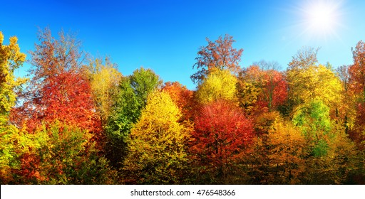 Panorama of multi-colored trees and autumn sun shining in the clear blue sky