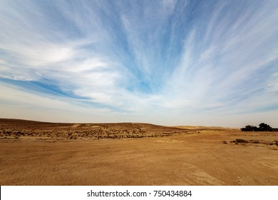 Panorama of Negev desert with trees and bushes