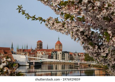 Panorama of Old Town of Gdansk with Motlawa river and branches with pink flowers of fruit tree Prunus serrulata. - Shutterstock ID 1976929859