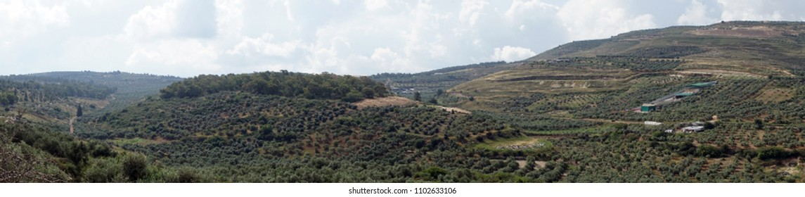 Panorama of olive groves near Beit Rimon, Israel