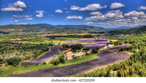 Panorama on fields of lavender and the mount Ventoux in Provence (France)