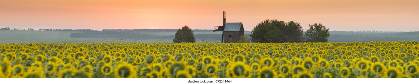 panorama with orange morning before sunset with sunflowers field and old mill in Ukraine