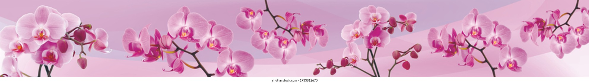 panorama of orchids, pink flowers