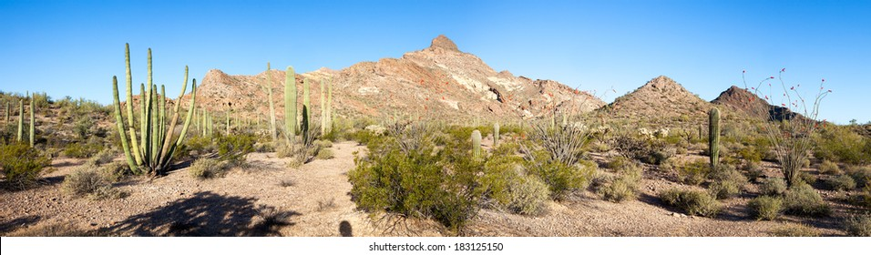 Panorama of Organ Pipe Cactus National Monument.