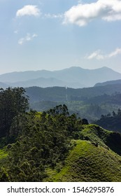 panorama over the green lush tea plantations in munnar, india