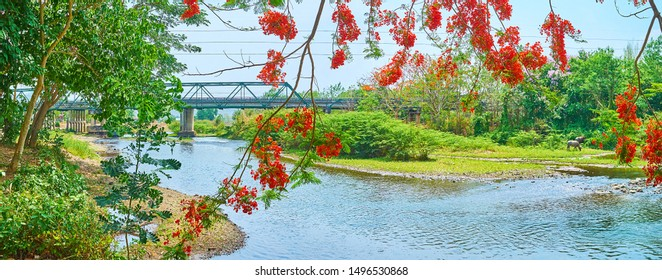 Panorama of the Pai river, lush greenery around it, branches of blooming flame tree and Tha Pai Memorial bridge on the background, Pai suburb, Thailand