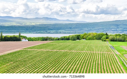 Panorama or panoramic aerial view of farmland in Ile D'Orleans, Quebec, Canada, plowed field, furrows, land, farm, house, barn, shed, Saint Lawrence river, hills, mountains and village