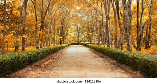 Panorama Pathway in Beautiful autumn park Landscape