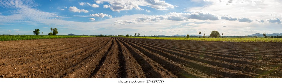Panorama photo rows of soil before planting. Furrows row pattern in a plowed field prepared for planting crops in spring. Panorama view of land prepared for planting and cultivating the crop.