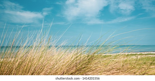 a panorama picture of the beach of the Baltic Sea in summer with dune grass in the foreground and blue sea water in the background and blue sky in the background