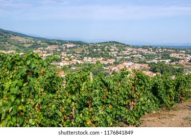 Panorama of picturesque Collioure and vineyards on the hills of the Pyrenees, Roussillion-Languedoc, France