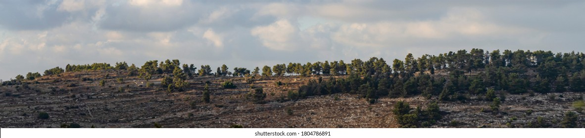 A panorama of a pine forest in the Judea mountains, near Jerusalem, Israel, under a cloudy sky.