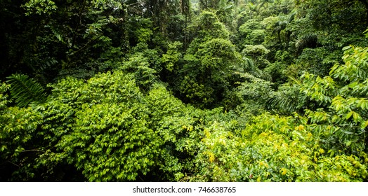 Panorama of Rain Forest in Costa Rica