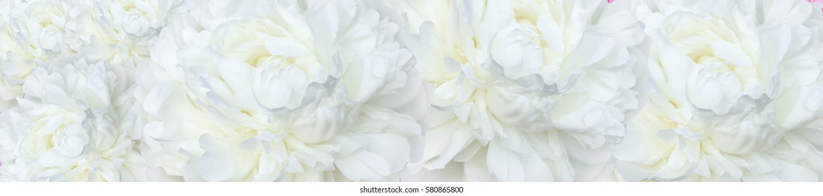 panorama repeatable  pattern  scented fragrant trendy  pale white peonies