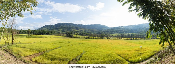 Panorama rice field and mountain. forest cover mountain. mountain in north Thailand.
