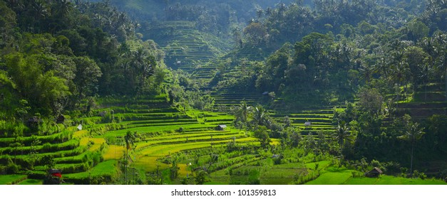 Panorama of rice fields in a mountains