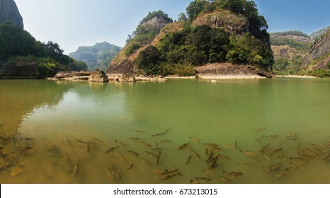 Panorama of river full of fish in Wuyi Mountains park in Fujian province, China.