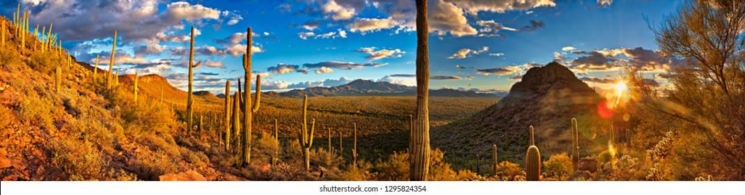 Panorama of Saguaro National Park at sunset.