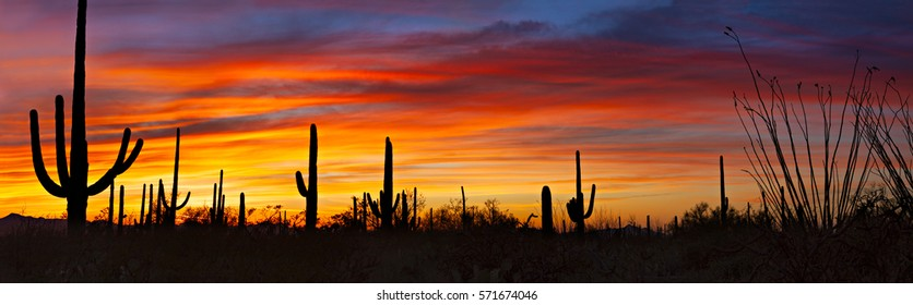 Panorama of Saguaro silhouetting against red sky at sunset.