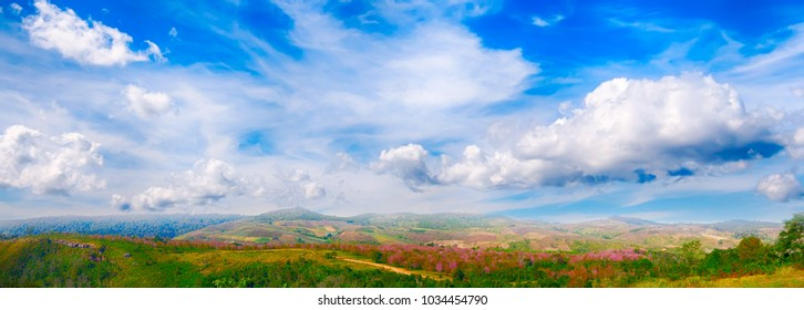 Panorama of sakura or cherry blossom tree on mountain with blue sky and cloud  at Thailand.