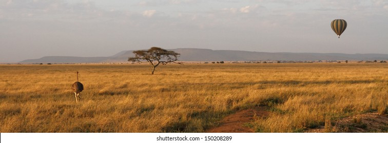Panorama of the savannah in the Serengeti with an ostrich, acacia tree and hot air balloon.