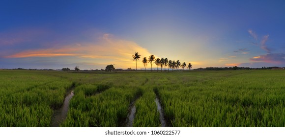 Panorama of a scenery of a paddy field with tropical trees and beautiful sunset colours