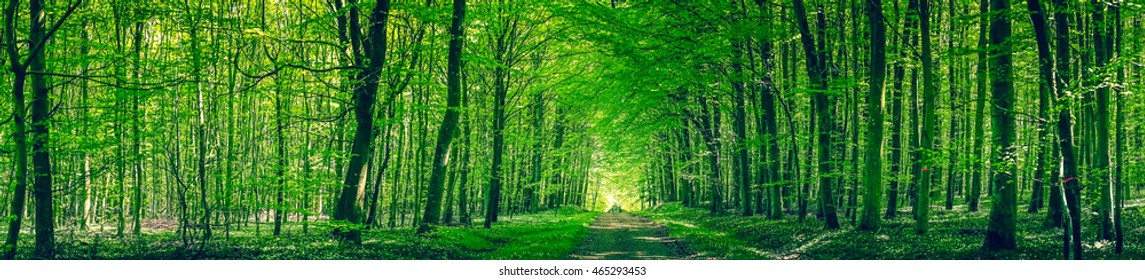 Panorama scenery with a road in a green forest