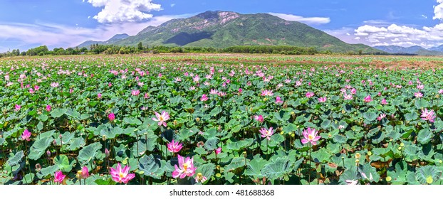Panorama Selective focus blurred lotus blooming season Pink Lotus flower and plants in the countryside