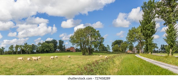 Panorama of sheep in a dutch landscape near Wetsinge, Netherlands