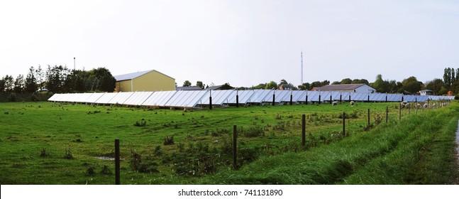Panorama of sheep farm in solar farm or solar farm in sheep farm in Denmark.