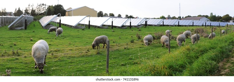 Panorama of sheep farm in solar farm or solar farm in sheep farm in Denmark.