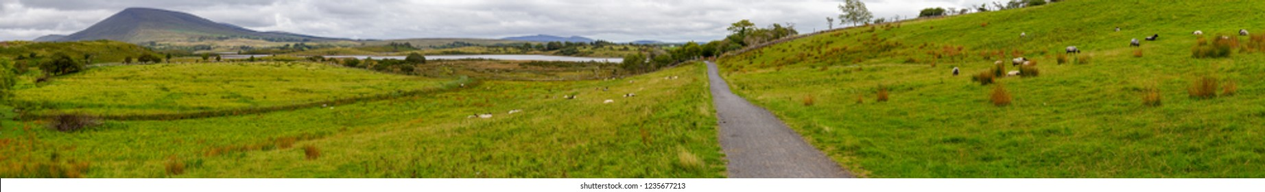 Panorama with sheep herd in a farm, lake and mountains in background, Great Western Greenway trail, Ireland