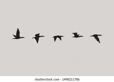 Panorama of a silhouette of a duck flying across the sky