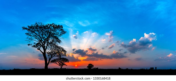 Panorama silhouette tree in africa with sunset and blue sky.Tree silhouetted against a setting sun.Dark tree on open field dramatic sunrise.