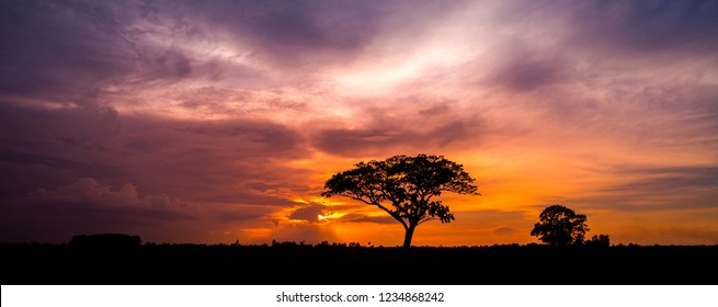 Panorama silhouette tree in africa with sunset.Dark tree on open field dramatic sunrise.Beautiful evening clouds sky.