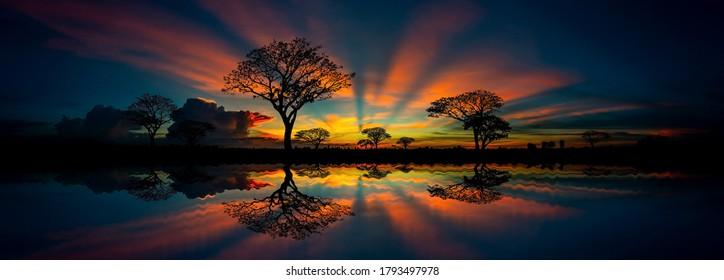 Panorama Silhouette Baum in Afrika mit Sonnenuntergang.Tree silhouetted gegen eine untergehende Sonne Reflexion auf Wasser.Typischer afrikanischer Sonnenuntergang mit Akazienbäumen in Masai Mara, Kenia.