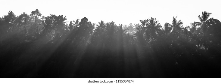 panorama of silhouette tropical forest tree with beautiful rim light in Bali