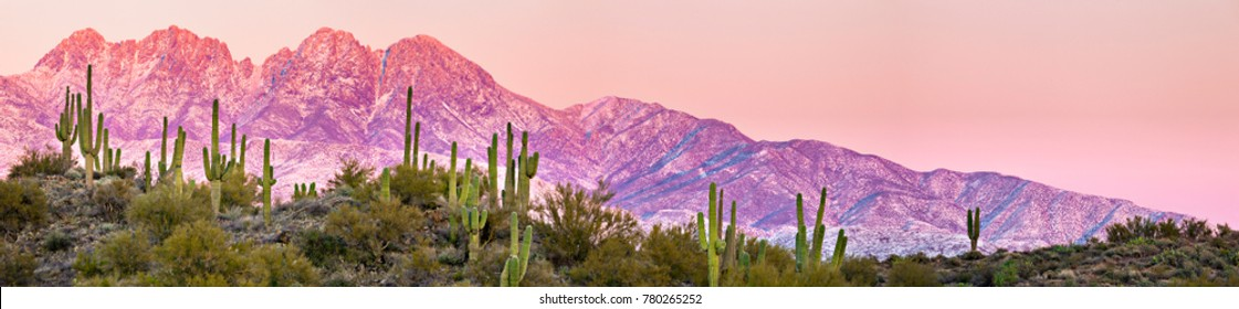 Panorama of snow covered Four Peaks, with Saguaros in foreground. Near Phoenix AZ.