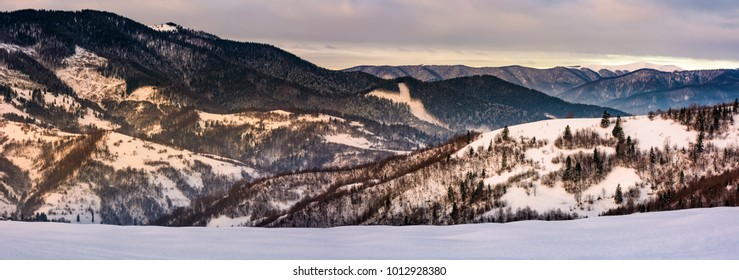 panorama snowy forested hills in winter. beautiful landscape with mountain ridge with snowy peaks in the distance