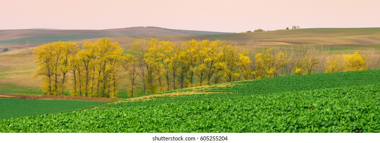 Panorama of south moravia fields with a group of yellow autumn trees.