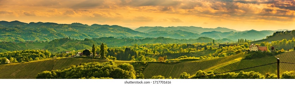 Panorama of South Styria Vineyards landscape near Austria - Slovenia border. View at Vineyard fields in sunset in spring. Tourist destination.