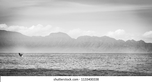 Panorama of Southern Right Whale breaching next to kayakers in Hermanus, South Africa in black and white