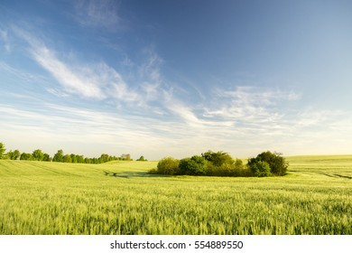 panorama spring green field