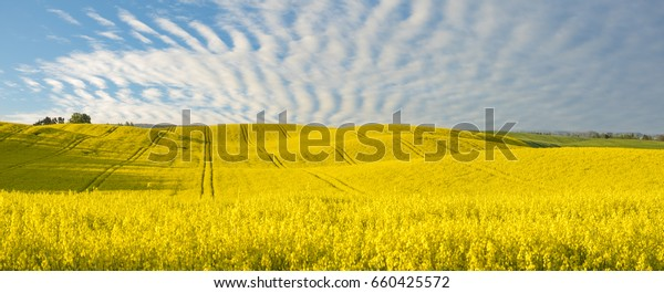 Panorama of spring, green field